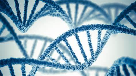 CRISPR Cas9 :Le premier embryon humain génétiquement modifié est chinois Th-2